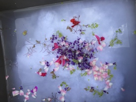 Making seed and petal paper